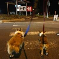 横断歩道では注意して!!