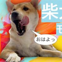 生活のリズムを整えてくれる柴犬的モーニングルーティン