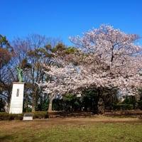 萩中公園 桜|東京都大田区新築一戸建てビーテック