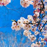 いま咲くここに咲く幸せ♡