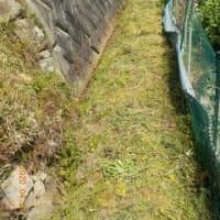 刈り込みばさみで草刈りをしました