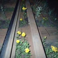 線路際の植生