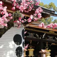 京の梅花情報 北野天満宮 梅苑