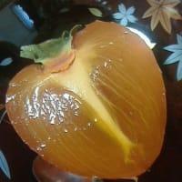 今日の枯露柿(11月23日)