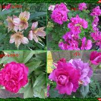 夏の花に植え替え