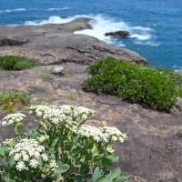 海の日には やっぱり 海へ・・・ 日向市のリアス式海岸