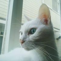 出窓で良いお天気♪ニャう。