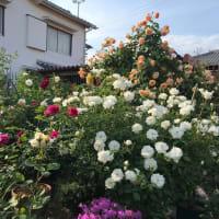 花が美しい、この季節
