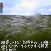 【韓国ドラマ】一枝梅(イルジメ)