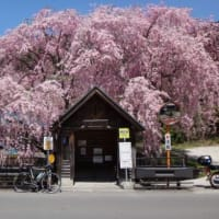 リハビリ花見ポタ 2