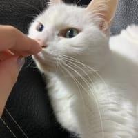 #猫の日 ニャのに、口元ビロ~~ンってせんでくれるかニャ?ニャう。