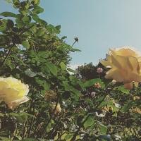 §96「黄色い人」遠藤周作【1955】