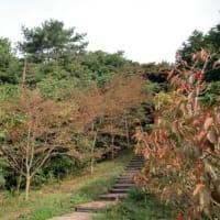 『千年の森プロジェクト』