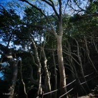 【Apr_10】猫崎半島の背中は良質の森。