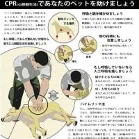 犬と猫の心肺蘇生方法