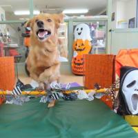 「カウンセリング」と「幼稚園体験」について  犬のしつけ教室@アロハドギー