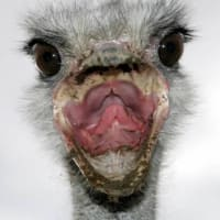 ロシアで鳥インフルエンザ