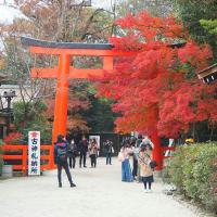 下鴨神社の紅葉見頃です。
