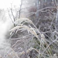 寒い朝特権♪ Rime ice