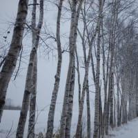雪降りの日は音楽のダビング