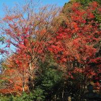 20201京都の紅葉 今熊野観音寺終わり(12/2)
