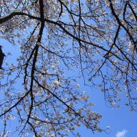 春だけど・・・
