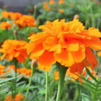 9月の庭に咲く