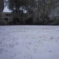 今シーズン初めての積雪