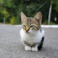 間違いだらけの地域猫活動1