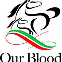 キャロットクラブ 2020年度 募集馬検討