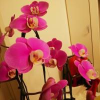 シャンソン歌手リリ・レイLILI LEY 東京文化芸術の旅から帰宅