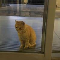 猫の街にある美術館