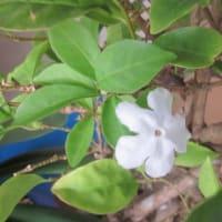 鉢植えの草花