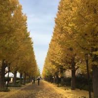 昭島の黄金の道