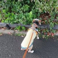 Choco.と歩こう♪
