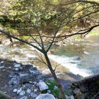 川床での食事が気持ち良い春の訪れ|牛なべ 右近