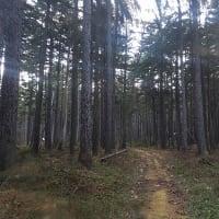 夕方の森 Evening forest