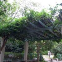9/10~9/13、台風15号で樹木がやられた!復旧の様子も