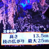 4/22 6時から昭明がオン