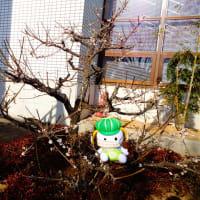 【図書館】梅の花が咲きました!