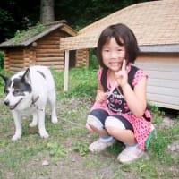 犬喰いクマ、知床羅臼町