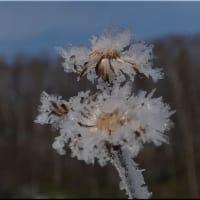 今日の森から、樹霜です。
