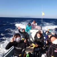 2020.11.13-15 御蔵島ドルフィンツアー