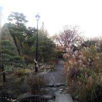 初冬の隅田公園&百花園。その1。