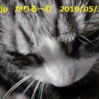 二階建てバス 保護猫カフェひだまり号 cari.jp