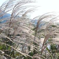 朝の太田川沿い 彼岸花