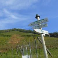 ココ・ファーム・ワイナリーの葡萄畑と、素敵なカフェやショップ。