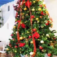 今年もクリスマスツリー飾り付けました♪じねんじょ蕎麦 箱根 九十九