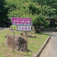 御津自然観察公園 あじさい '21