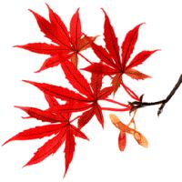 ■「平成29年11月大分県内将棋大会」ご案内